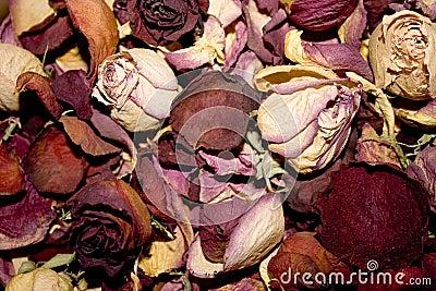 Dead rosebuds