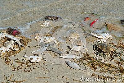 Dead sea fishes, crabs, grass.