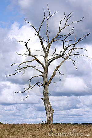 Free Dead Tree Royalty Free Stock Images - 10893719