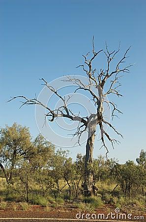 Free Dead Tree Royalty Free Stock Image - 13170916