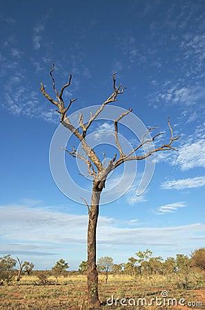 Free Dead Tree Stock Photography - 13301052