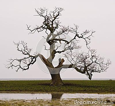 Free Dead Tree Royalty Free Stock Photography - 16391577