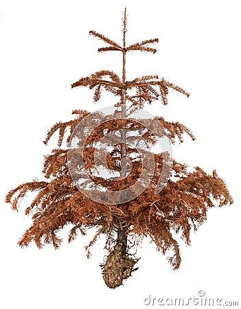 Free Dead Tree Stock Photo - 26265190
