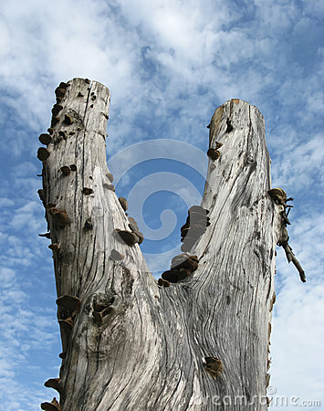 Free Dead Tree Royalty Free Stock Image - 27237366