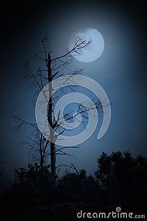 Free Dead Tree Royalty Free Stock Photo - 37664005