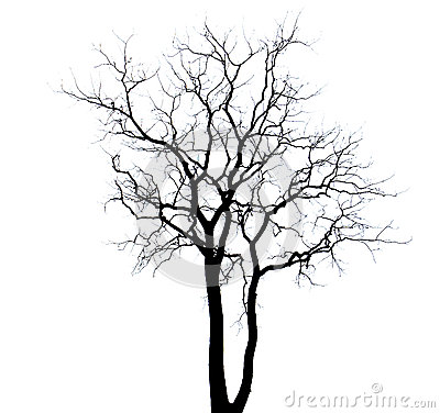 Free Dead Tree Stock Photography - 41941372