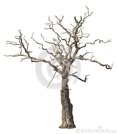 Free Dead Tree Stock Photography - 67327512