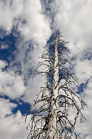 Dead tree against sky