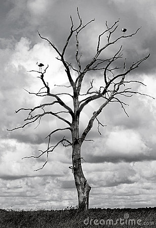 Free Dead Tree And Two Birds Stock Images - 13996694
