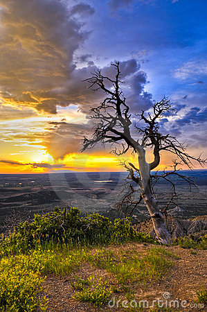 Free Dead Tree At Sunset Stock Photography - 21043312
