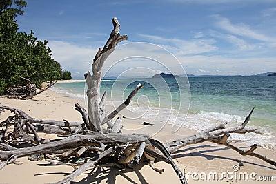 Driftwood, Dead tree at a beach   Koh Bulon Thailand