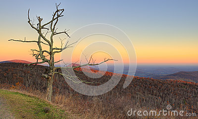 Dead tree in blue ridge mountains