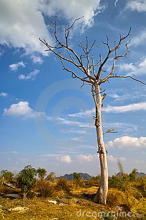 Dead tree in countryside