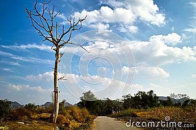 Dead tree in countryside