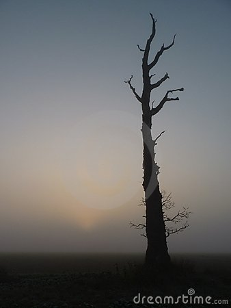Dead Tree at Dawn