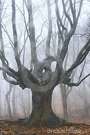Dead tree in foggy forest