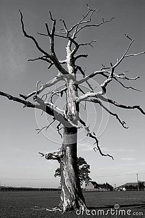 Dead Tree In Greyscale