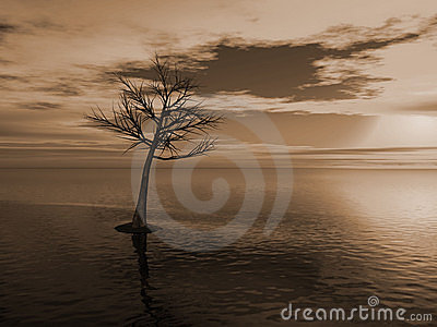 Dead tree in a lake