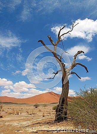 Dead Tree in namib Desert