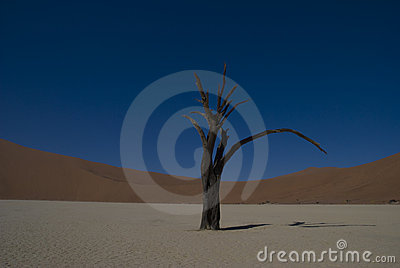 Dead Tree in Namib Desert