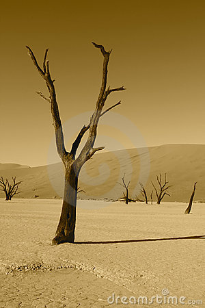 Dead tree in Namibian desert