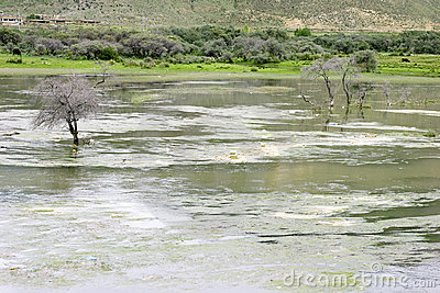 Dead tree in polluted river