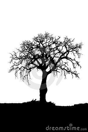Free Dead Tree Silhouette Stock Photos - 16587583