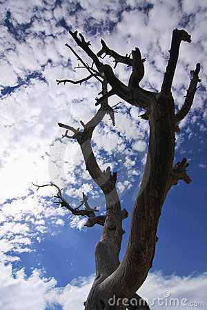Free Dead Tree Silhouette On Blue Sky And Clouds Royalty Free Stock Images - 5166429