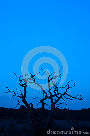 Tree silhouette vertical