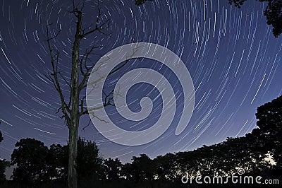 Dead Tree Stars