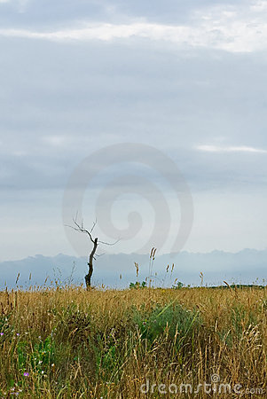 Dead tree in steppe