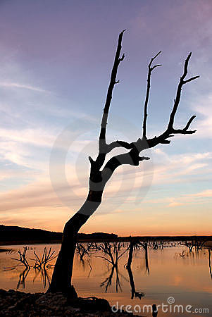 Dead Tree at Sunset