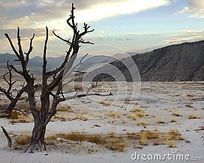 Dead Tree on Terrace at Sunrise
