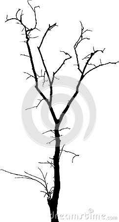 Free Dead Tree Without Leaves Vecto Royalty Free Stock Photography - 110113497