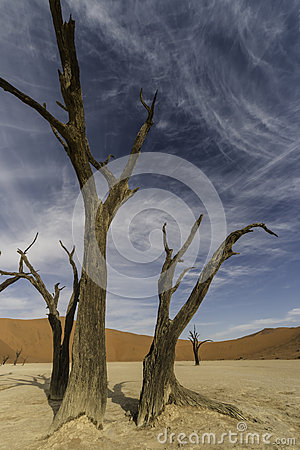 Free Dead Trees Stock Photography - 64817722