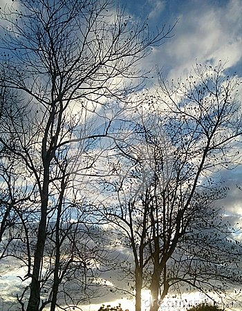 Free Dead Trees Stock Photo - 87496290