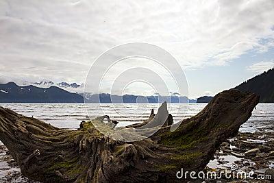 Dead trees on beach