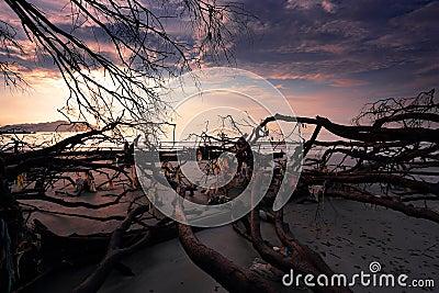 Dead trees at beach