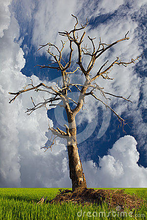 Dead trees in a cloudy sky background.