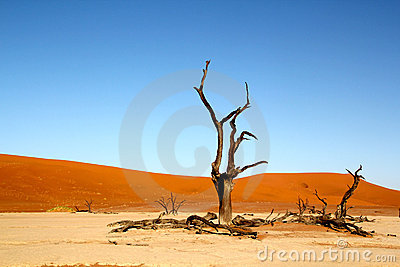 Dead trees and dunes in desert