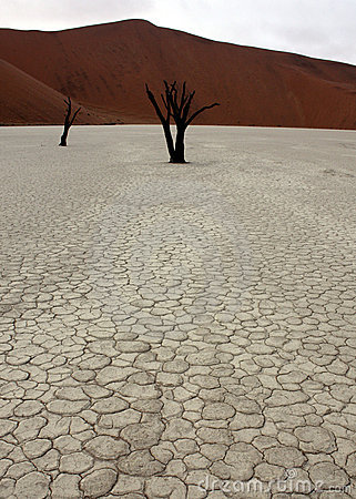 Free Dead Trees In Deadvlei Royalty Free Stock Photos - 13026538