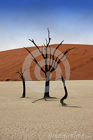 Free Dead Trees In Deadvlei Stock Photo - 45192880