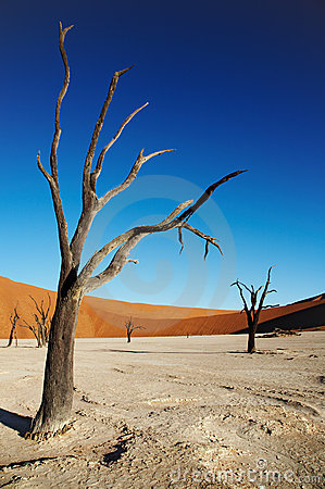 Free Dead Trees In Namib Desert Royalty Free Stock Photos - 2516498