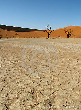 Dead trees in Namibian desert