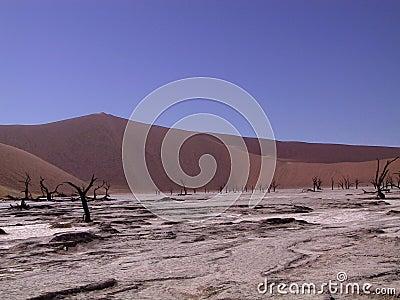 Dead trees in the salt lake