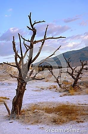 Dead Trees on Terrace
