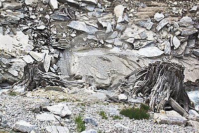 Dead trunks along Zamser Bach, Austria