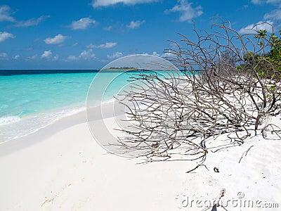 Dead trunks on island paradise