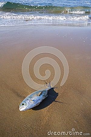 Dead Tuna