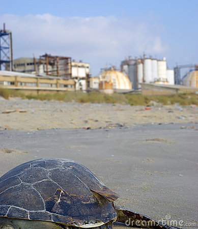Dead turtle on industrial factory